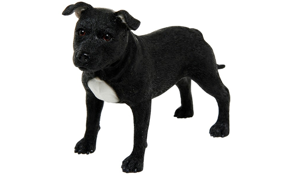 best breed dog black standing staffordshire terrier