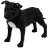 best breed dog black standing staffordshire t