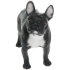best breed dog standing french bulldog